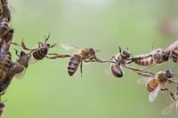 20 10 08 08 44 15 thumb bee chain