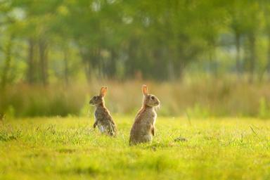 Thumb two rabbits