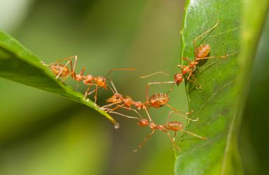 Thumb ant bridge unity