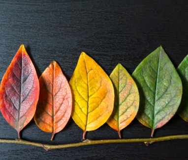 Colorful leaves diversity concept thumb