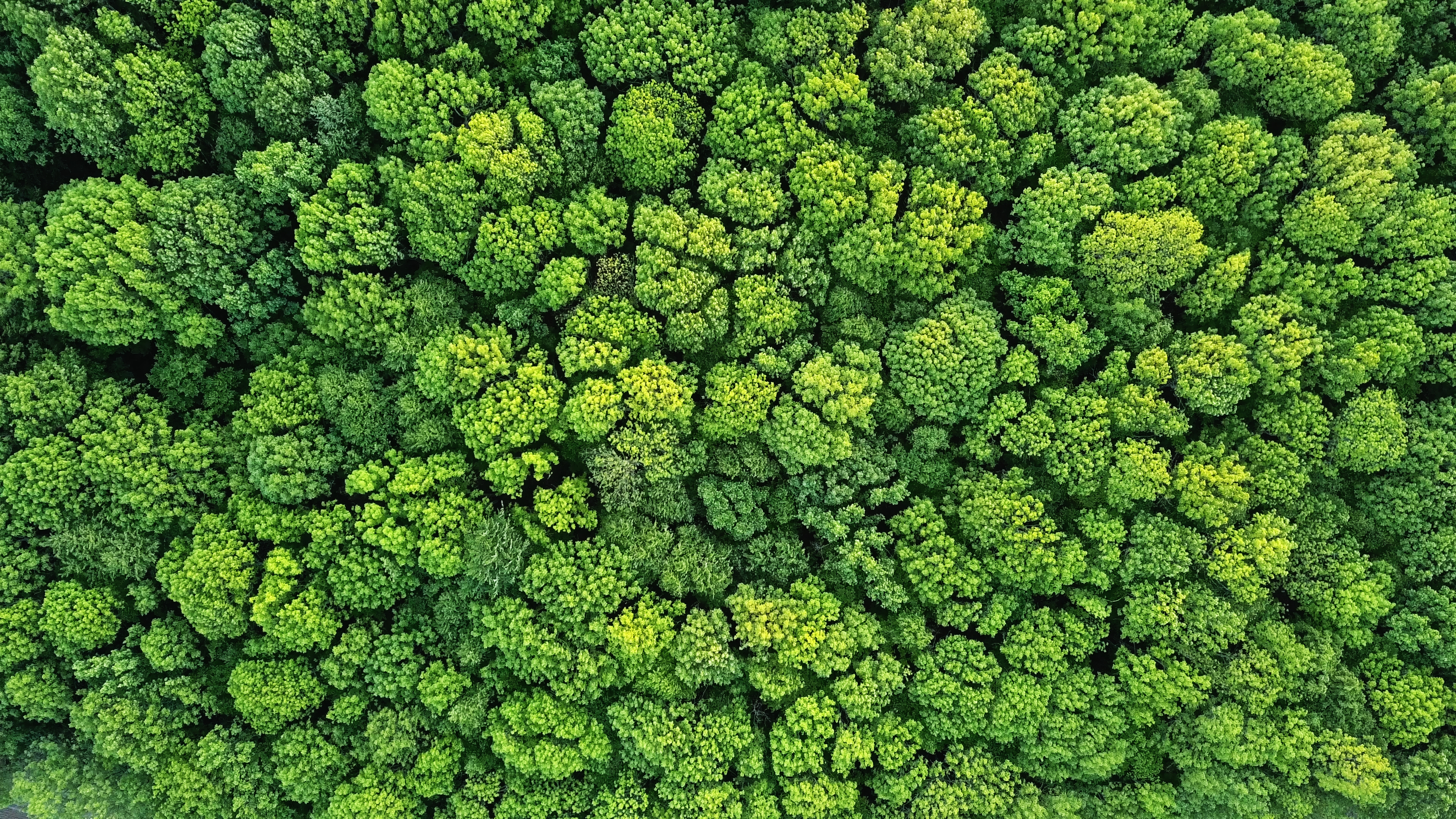 Top view of a young green forest