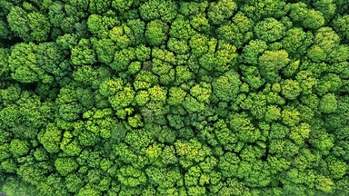 Thumb top view of a young green forest