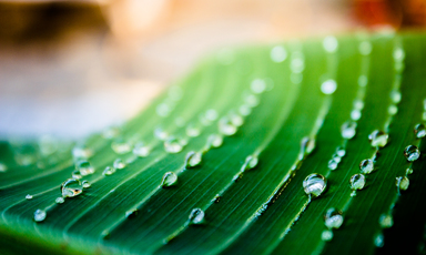 Thumb close up of green leaf with water drops