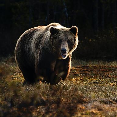 Thumb blog imgs bear