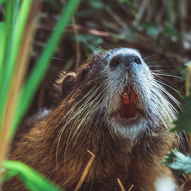 Thumb blog imgs not a beaver